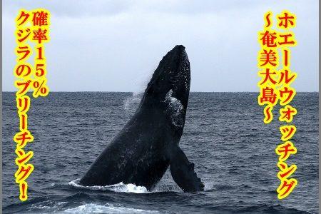 【奄美大島】2月ホエールウォッチング旅行!天気や観光スポットは?